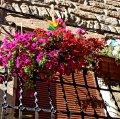 Nucli històric de Bellmunt d'Urgell