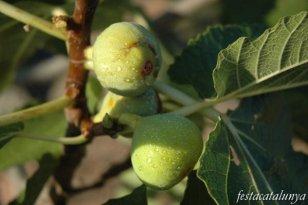 Alguaire - Fira de la Figa